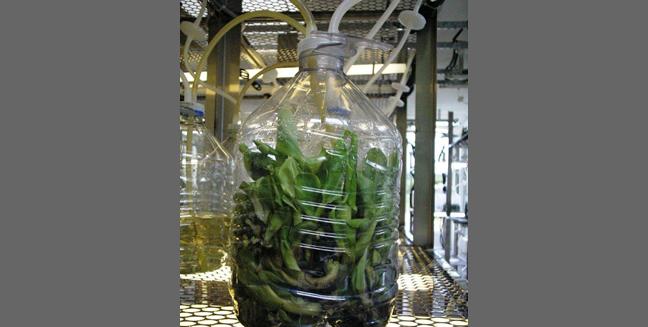 Biotecnologia Vegetal