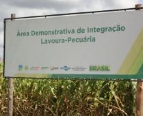 Unidade demonstrativa de ilp da agrobrasília