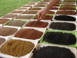 Amostras para análise - CAMPO Centro de Tecnologia Agrícola e Ambiental (Paracatu-MG)
