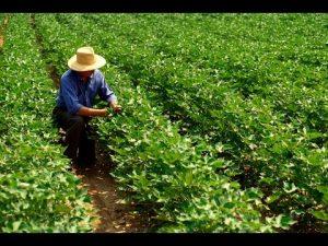 agricultor soja
