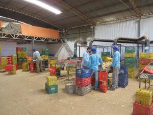 agroindústria com sitema de beneficiamento de hortifruti