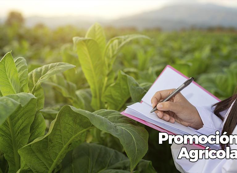 promocao-agricola-es
