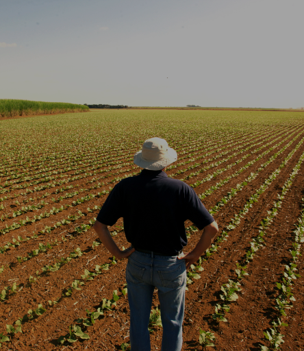 Technical Assistance and Rural Extension